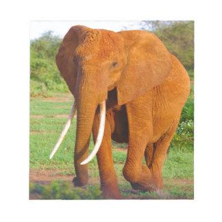 Beautiful Orange Elephant Notepad
