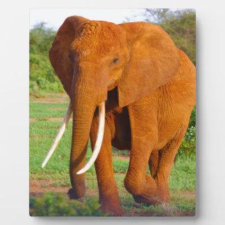Beautiful Orange Elephant Plaque