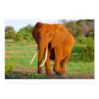 Beautiful Orange Elephant Postcard