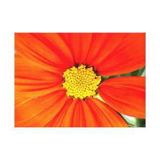 Beautiful Orange Flower Canvas Print