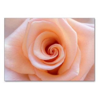 Beautiful orange rose bloom table cards