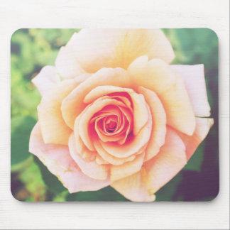 Beautiful orange rose blossom mouse pad