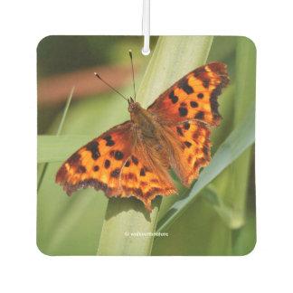Beautiful Orange Satyr Comma Butterfly Air Freshener