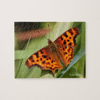 Beautiful Orange Satyr Comma Butterfly Puzzle
