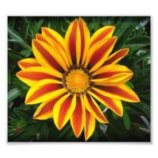 Beautiful Orange Sun Flower Photo