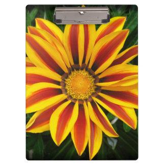Beautiful Orange Sun Flower Photo Clipboard