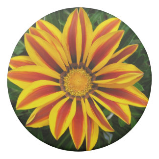 Beautiful Orange Sun Flower Photo Eraser