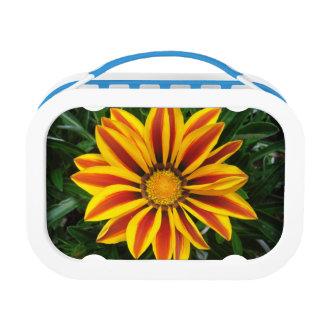 Beautiful Orange Sun Flower Photo Lunch Boxes