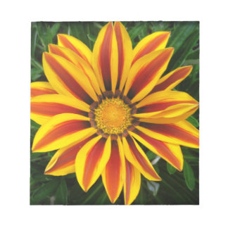 Beautiful Orange Sun Flower Photo Notepad