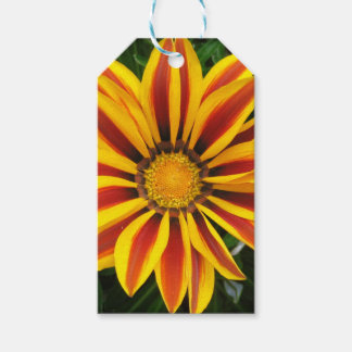 Beautiful Orange Sun Flower Photo Pack Of Gift Tags