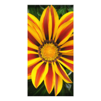 Beautiful Orange Sun Flower Photo Personalized Photo Card