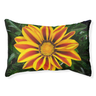 Beautiful Orange Sun Flower Photo Pet Bed