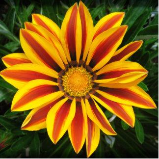 Beautiful Orange Sun Flower Photo Photo Sculpture Button