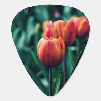 beautiful orange tulip garden guitar pick