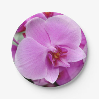 Beautiful Orchid Paper Plate