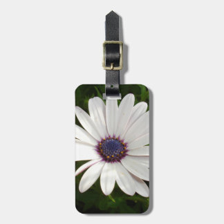 Beautiful Osteospermum White Daisy Luggage Tag