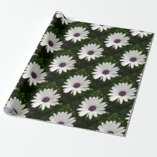 Beautiful Osteospermum White Daisy Wrapping Paper