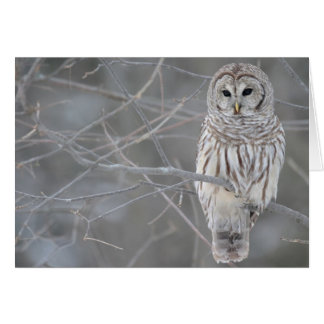 Beautiful Owl Note Card