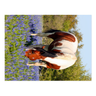 Beautiful Paint Horse in a field of Blue Bonnets Postcard