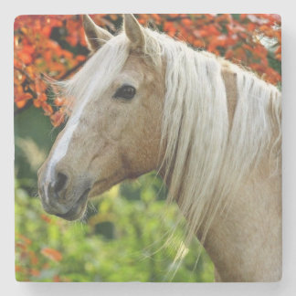 Beautiful Palomino Draft Horse Stone Coaster