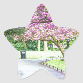 Beautiful park during the spring star sticker