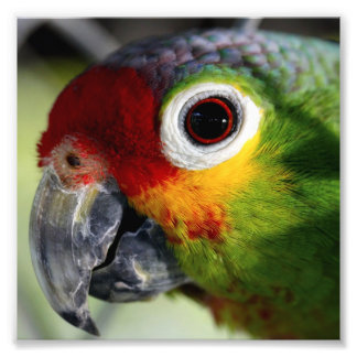 Beautiful Parrot Photo Print