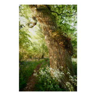 Beautiful path through spring woodland poster