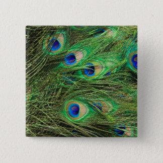 Beautiful Peacock 2 Inch Square Button