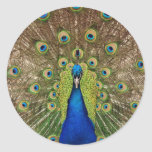 Beautiful peacock and tail feathers print stickers