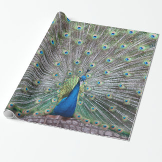 Beautiful Peacock Bird Plumage Colorful Feather