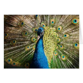 Beautiful peacock card