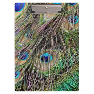 Beautiful Peacock Feathers Clipboard