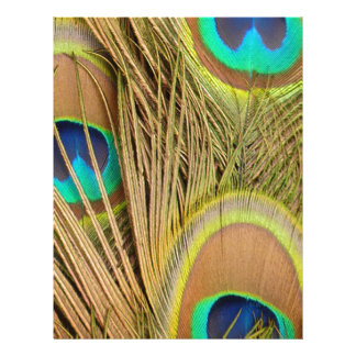 beautiful peacock feathers personalized letterhead