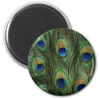 Beautiful Peacock Feathers Refrigerator Magnet