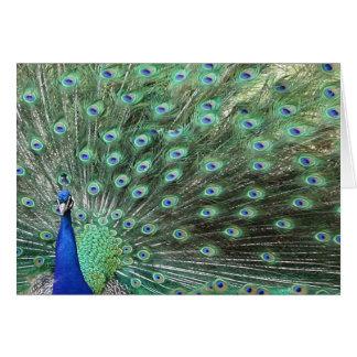 Beautiful Peacock Just Saying Hello Card