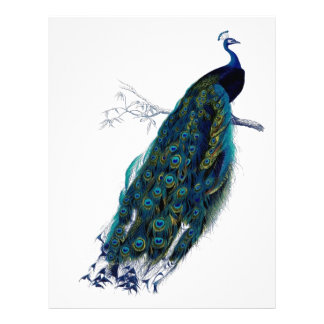 Beautiful peacock letterhead