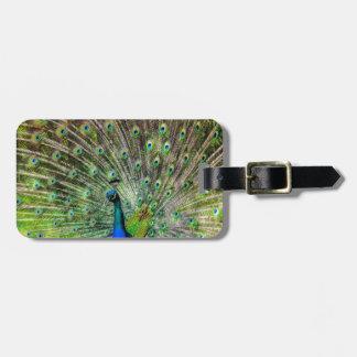 Beautiful Peacock Luggage Tag