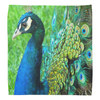 Beautiful Peacock Photo Bandanna