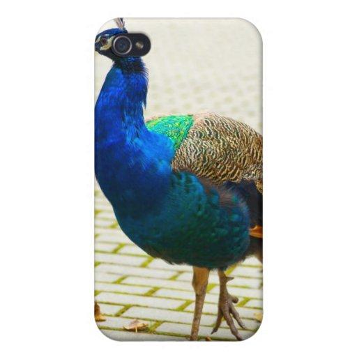 Beautiful Peacock Speck Case iPhone 4 Case