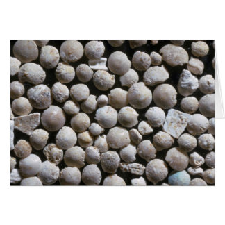Beautiful Pebbles from Fossil forams, Belgium Card