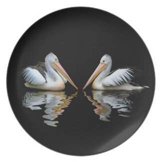 Beautiful pelicans reflection on black background plate