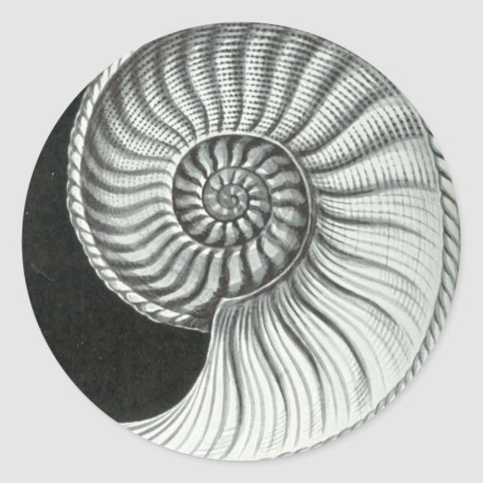 Beautiful pencil drawing of Amaltheus ammonite Classic Round Sticker