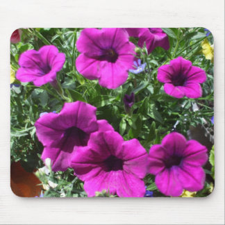 Beautiful Petunias in Bed of Colour Mouse Pad