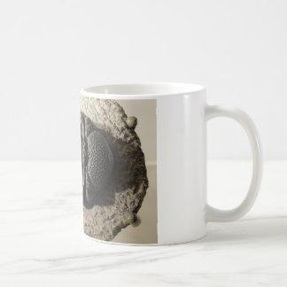 Beautiful Phacops trilobite fossil photo Coffee Mug