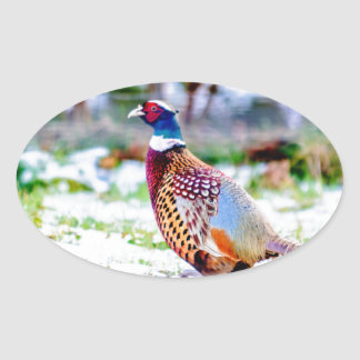 Beautiful Pheasant On Snow Covered Grass Oval Sticker