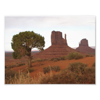 Beautiful photo of a tree in Monument Valley