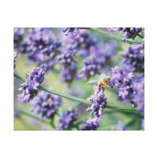 Beautiful photo purple lavender flowers and bee canvas print