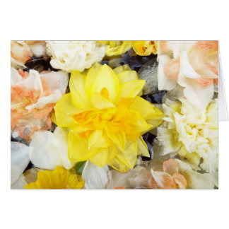 Beautiful photo spring daffodils floating on water card