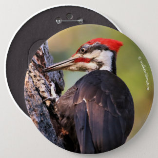 Beautiful Pileated Woodpecker on the Tree 6 Inch Round Button