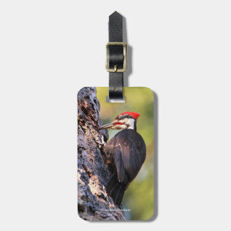 Beautiful Pileated Woodpecker on the Tree Luggage Tag
